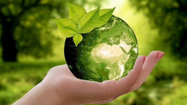 Conservation Around the World