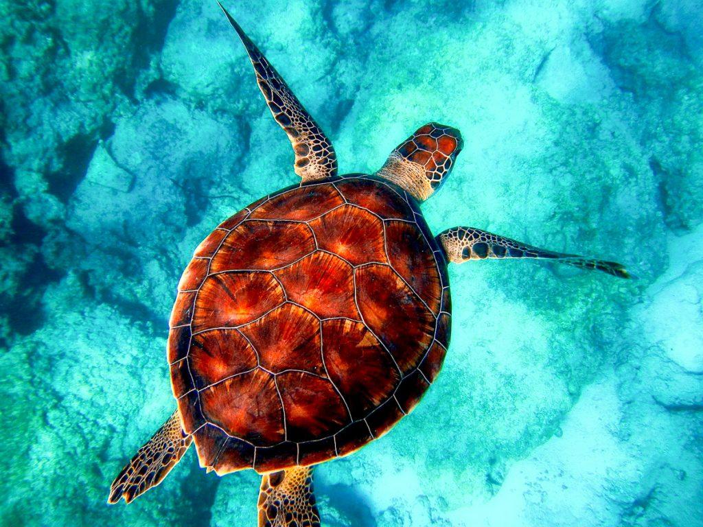 Sea Turtle Science